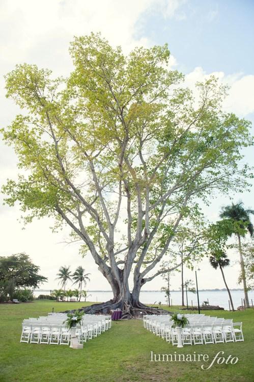 Un arbre gigantesque