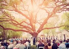 10 façons d'utiliser un arbre en «arche de cérémonie»